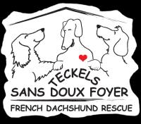 Page D Accueil Teckels Sans Doux Foyer